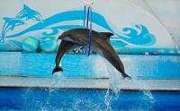 Цирк, дельфинарий, зоопарк